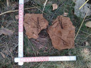 Resztki starazytnych raslin na pomniku Kavalcy 1